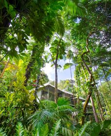Daintree Eco Lodge and Spa - Melbourne Tourism