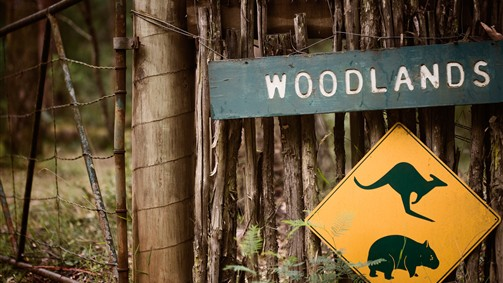 Woodlands Rainforest Retreat - Melbourne Tourism