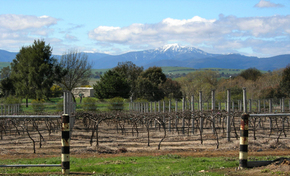Buller View Wines - Melbourne Tourism