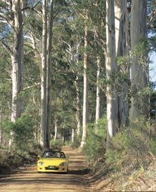 Mount Shadforth Scenic Drive - Melbourne Tourism