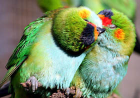 Rainbow Jungle - The Australian Parrot Breeding Centre - Melbourne Tourism