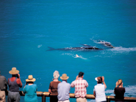 Whale Watching At Head Of Bight - Melbourne Tourism