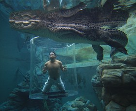 Crocosaurus Cove - Melbourne Tourism