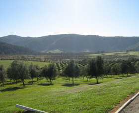 Hastings Valley Olives - Melbourne Tourism