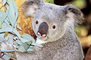 Perth Zoo General Entry Ticket and Sightseeing Cruise - Melbourne Tourism