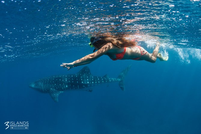 Swim with Whale Sharks - Ningaloo Reef - 3 Islands Whale Shark Dive