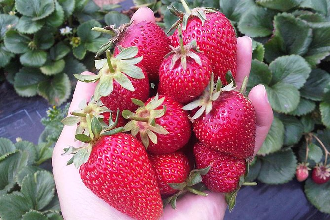 Mornington Peninsula including Strawberry Farm Day Tour from Melbourne - Melbourne Tourism