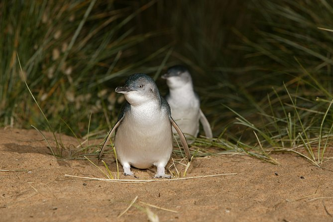 Full-Day Penguin Parade and Melbourne City Tour From Melbourne - Melbourne Tourism