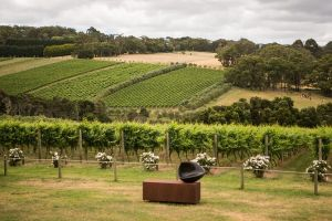 Montalto Vineyard Mornington Peninsula Discovery Wine Tasting and Lunch - Melbourne Tourism