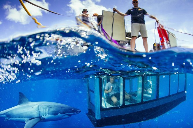 White Shark Tour with Optional Cage Dive from Port Lincoln - Melbourne Tourism
