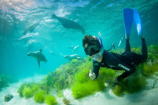 Half-Day Sea Lion Snorkeling Tour from Port Lincoln - Melbourne Tourism