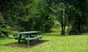 Williams River picnic area - Melbourne Tourism