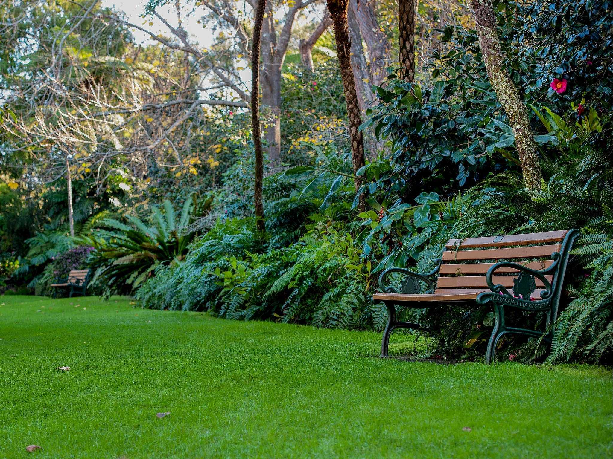 EG Waterhouse National Camellia Gardens - Melbourne Tourism