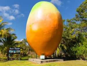 Big Mango - Melbourne Tourism
