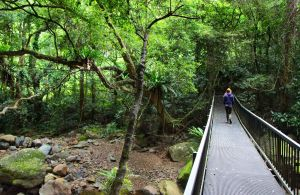 Rainforest Loop Walk Budderoo National Park - Melbourne Tourism