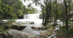 Nellies Glen Carrington Falls - Melbourne Tourism