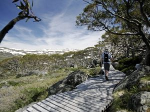 Snow Gums boardwalk - Melbourne Tourism