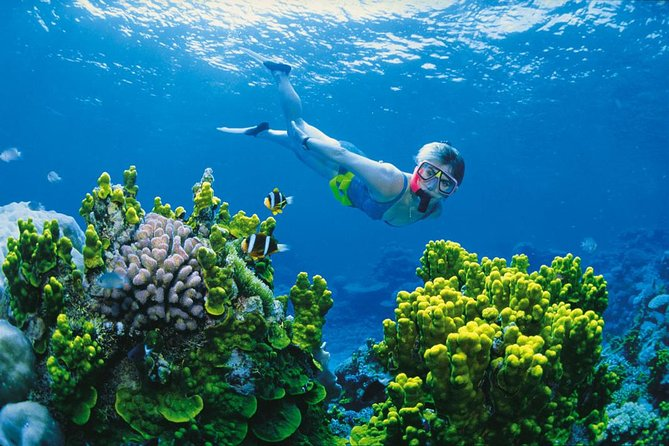 Full Day Snorkel In The Great Barrier Reef - Melbourne Tourism