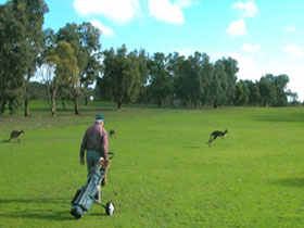 Coffin Bay Golf Club - Melbourne Tourism