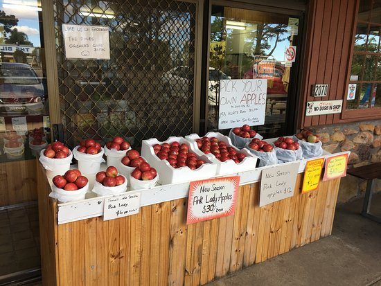 The Pines Orchard - Melbourne Tourism