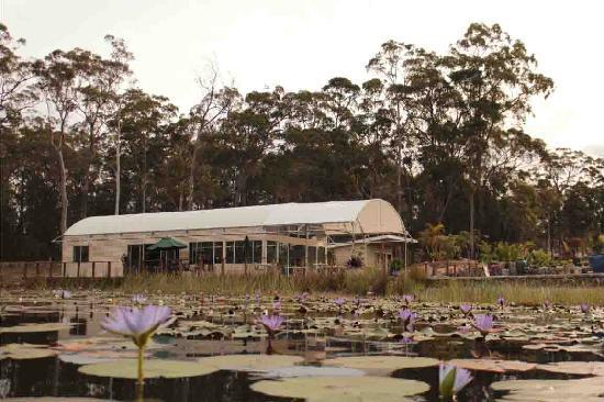 Abundance Cafe and Garden Centre - Melbourne Tourism