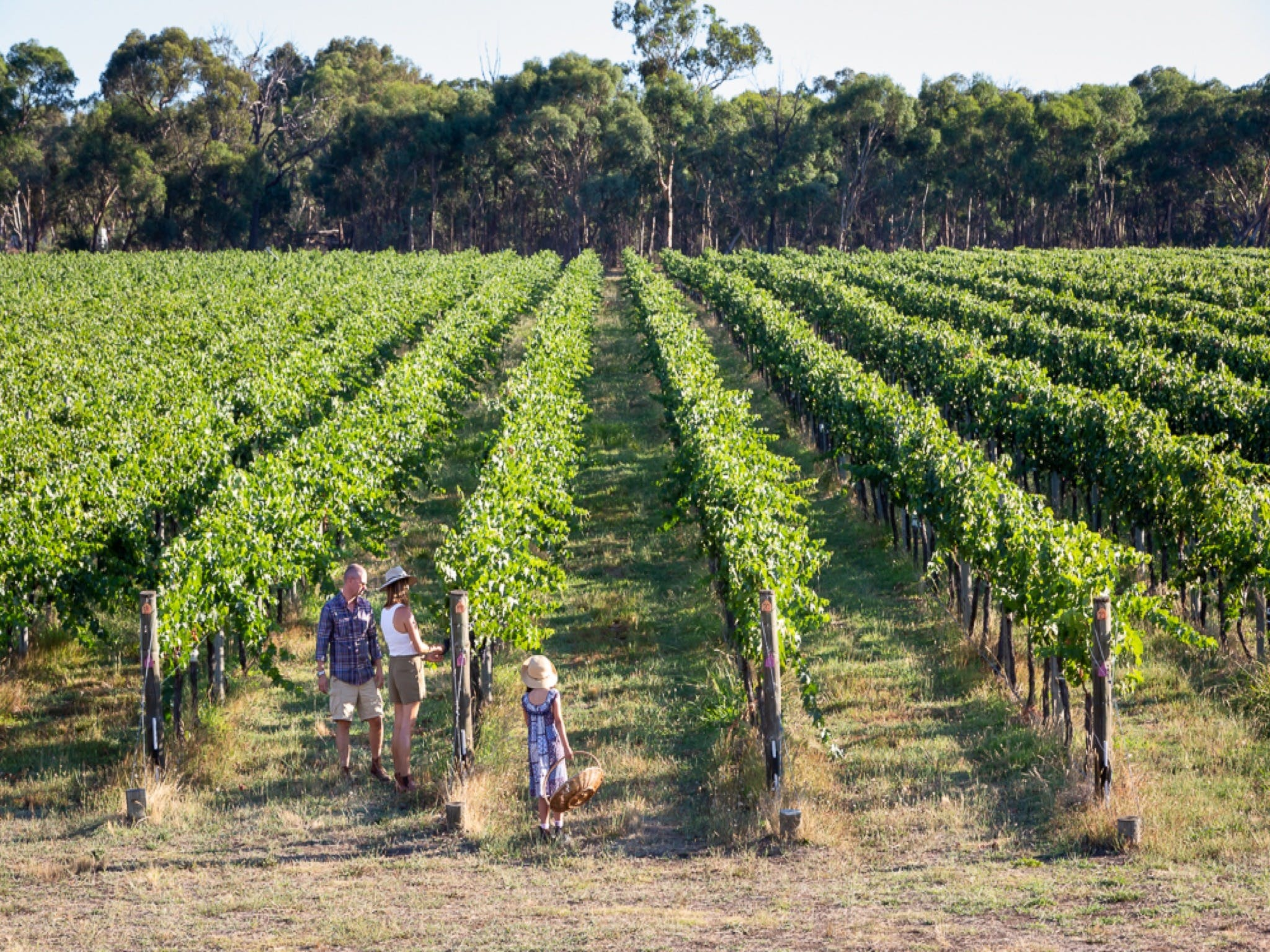 Weathercraft Wines - Melbourne Tourism